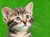 picture of delinquency  - Cute little kitten playing on artificial green grass - JPG