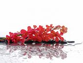 beautiful red orchid with black stones reflection