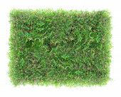 Rectangle Green Grass Texture