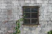 Window & Vine
