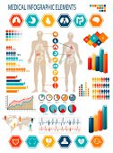 Medical infographics elements. Human body with internal organs. Raster version