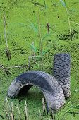 Discarded Old Tyres In Contaminated Pond Puddle, Water Pollution Concept, Vertical Green Sweet Grass