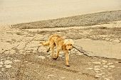 A dog walking on corroded asphalt road in Ohrid