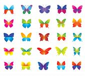 Set of beautiful colorful butterflies for decoration.