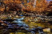 picture of guadalupe  - Beautiful Fall Foliage Surrounding the Guadalupe River Texas - JPG