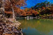 Interesting Gnarly Roots and Brilliant Fall Foliage on the Guadalupe River in Texas