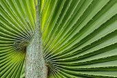 Soft Palm Leaves