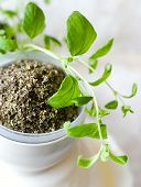 Fresh And Dried Marjoram In A White Cup On White Background