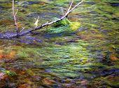 Green River In Washington