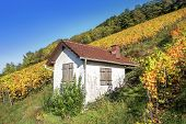 Little house in the autumnal vineyard