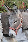 image of wild donkey  - a portrait of a cute donkey posing  - JPG