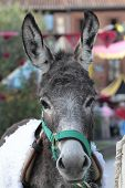 picture of wild donkey  - a portrait of a cute donkey posing - JPG