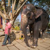 HAMPI, INDIA - FEBRUARY 5, 2013: Lakshmi, the temple elephant, and her keeper on the river bank on February 5, 2013 in Hampi, Karnataka, India. Hampi is a UNESCO world heritage site.