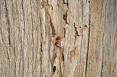 Firebug Wood Background
