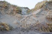 Erosion On A Sand Dune