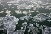 Ice sheets floating on the river