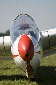 Portrait of a glider on grass