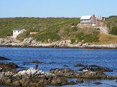 Cormorants and houses