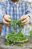 stock photo of rocket salad  - Organic vegetables - JPG