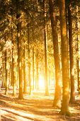 stock photo of penetration  - Sunlight penetrates through the trunks of the trees in the park - JPG