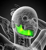 picture of jaw-bone  - 3d rendered illustration of a jaw bone  - JPG