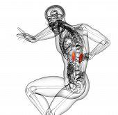 pic of urethra  - 3d render medical illustration of the kidney  - JPG