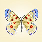 pic of butterfly  - Butterfly parnassius beautiful mountain butterfly vector illustration - JPG