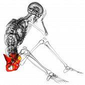 pic of pelvis  - 3d render medical illustration of the pelvis bone  - JPG