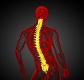 image of lumbar spine  - 3d render medical illustration of the human spine  - JPG