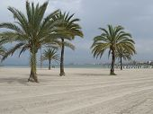 S'arenal Beach In Mallorca