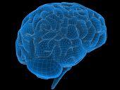 Cerebro de alambre