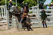 Cowboy Rides Dangerous Bull On Australia Day Rodeo Festival