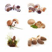 Edible mushrooms collection