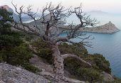 Tree And Coast