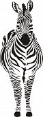 Zebra - black and zero