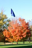 Golf Flag And Flagstick  With Colorful Fall Leaves
