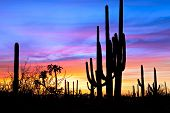 image of ocotillo  - Saguaro silhouetten in Sonoran Desert sunset lit sky - JPG