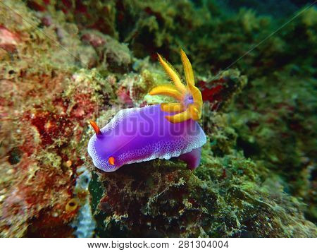 Nudibranchs Are A Group Of