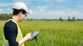 Young Asian Male Agronomist Or Agricultural Engineer Observing Green Rice Field With Digital Tablet  poster