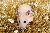 Little hamster in the golden tinsel