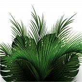 Palm Leaves On A White Background. Tropical Vegetation. Palm Tree Branches Realistic. poster