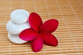 Tropical Plumeria And Zen White Stone Arrangement For Spa And Wellness Concept