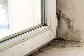 Dampness And Mold On Windows And Slopes poster