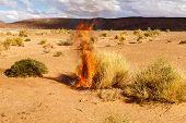 The Bush Burns Dry Grass, Sahara Desert, Dry Burning Bush poster