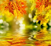 stock photo of fall leaves  - colorful autumn leaves reflecting in the water - JPG