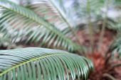 Houseplant Palm. Green Leafs Of Exotic Plant Indoors. Tropical Herb. Palm Root On Background. Brown  poster