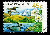 NEW ZEALAND - CIRCA 1991: A stamp printed in New Zealand, shows a giant taiko mount cook lily, blui