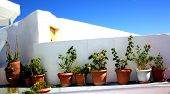 Flower pots on a Greek wall
