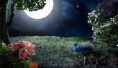 picture of garden eden  - A peacock standing in a garden by flower bushes and roses under a large moon - JPG