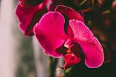 Purple Orchid. Closeup Selected Focus Purple Color Beautiful Tropical Orchid Flower. poster